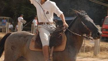 Equídeo Equino Crioulo Registrado Cavalo Zaina Trabalho - e-rural Imagens