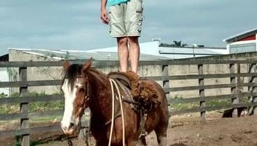 Equídeo Equino Crioulo Não Registrado Cavalo Alazã Trabalho - e-rural Imagens