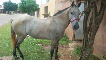 Equídeo Equino Diversos Comunicado Cavalo - e-rural Imagens