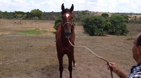 Equídeo Equino Diversos Não Registrado Cavalo Alazã Marcha Picada - e-rural Imagens