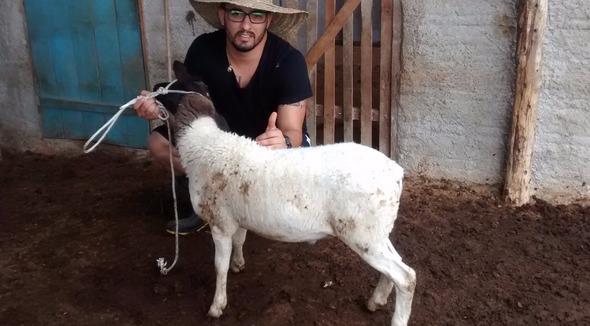 Ovino Corte Dorper Borrego 21-25kg - e-rural Imagens
