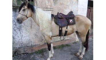 Equídeo Equino Mangalarga Marchador Comunicado Cavalo Pampa Marcha Picada - e-rural Imagens