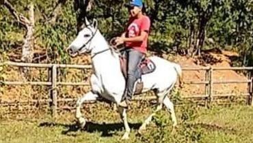 Equídeo Equino Mangalarga Marchador Não Registrado Cavalo Pampa Marcha Batida - e-rural Imagens