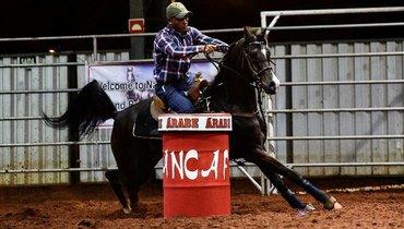 Equídeo Equino Árabe Registrado Cavalo Preta Trabalho - e-rural Imagens