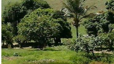 Propriedade Venda Haras - e-rural Imagens