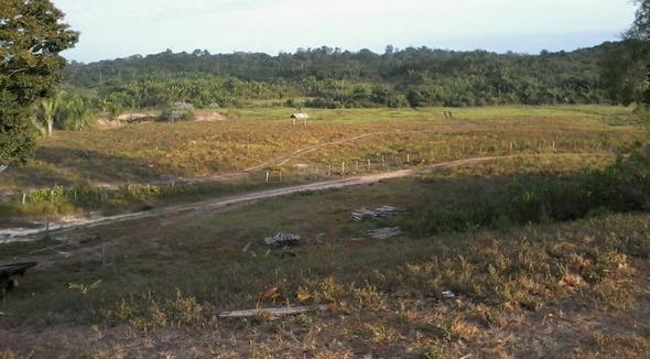 Equídeo Equino Quarto de Milha Registrado Égua - e-rural Imagens