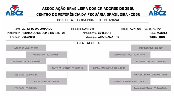 Bovino Corte Tabapuã Touro 16-20@ - e-rural Imagens