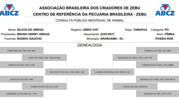 Bovino Corte Tabapuã Bezerra 6-10@ - e-rural Imagens
