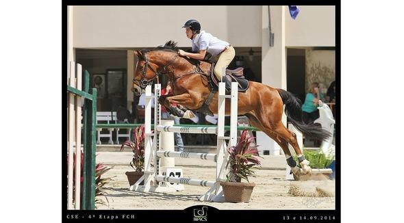 Equídeo Equino Diversos Registrado Cavalo Castanha Trabalho - e-rural Imagens