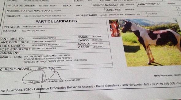 Equídeo Equino Mangalarga Marchador Não Registrado Potro Castanha - e-rural Imagens