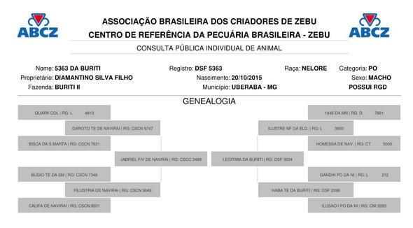 Bovino Corte Nelore Bezerra 11-15@ Andrológico em dia - e-rural Imagens