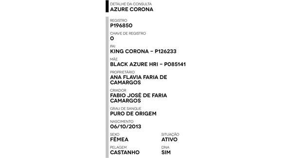 Equídeo Equino Quarto de Milha Registrado Égua Castanha - e-rural Imagens
