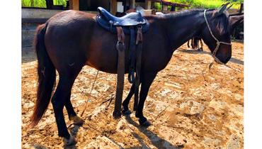 Equídeo Equino Diversos Não Registrado Cavalo Preta - e-rural Imagens