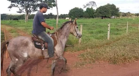 Equídeo Equino Mangalarga Registrado Égua - e-rural Imagens