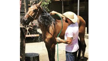 Equídeo Equino Campolina Registrado Cavalo - e-rural Imagens