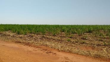 Propriedade Aluguel Fazenda Agricultura - e-rural Imagens