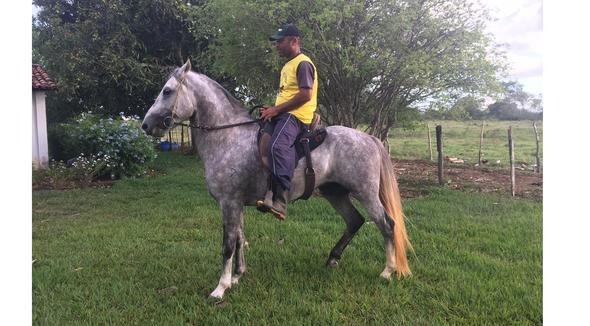 Equídeo Equino Mangalarga Marchador Registrado Cavalo Tordilha Marcha Picada - e-rural Imagens