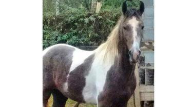 Equídeo Equino Mangalarga Marchador Registrado Cavalo - e-rural Imagens