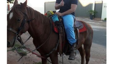Equídeo Equino Quarto de Milha Registrado Garanhão Alazã Trabalho - e-rural Imagens