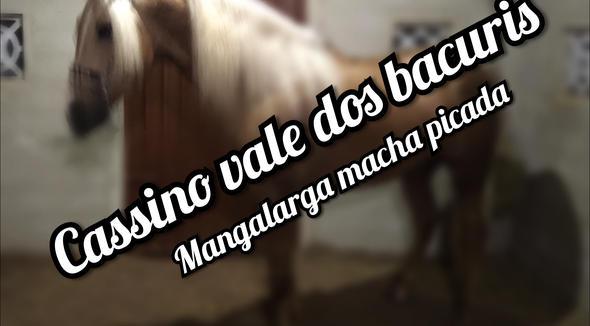 Equídeo Equino Mangalarga Marchador Cobertura Zaina Marcha Picada Registrado - e-rural Imagens