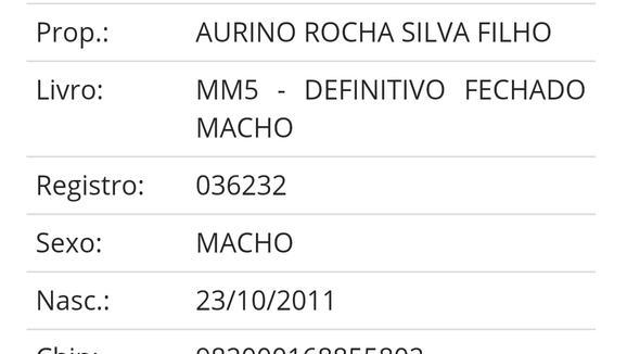 Equídeo Equino Mangalarga Marchador Garanhão Tordilha Marcha Batida Registrado - e-rural Imagens