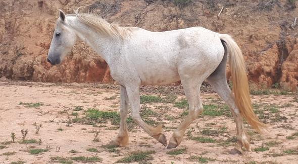 Equídeo Equino Diversos Não Registrado Cavalo - e-rural Imagens