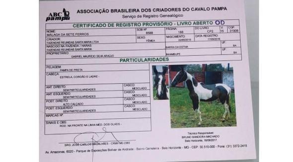 Equídeo Equino Pampa Registrado Potra Pampa - e-rural Imagens