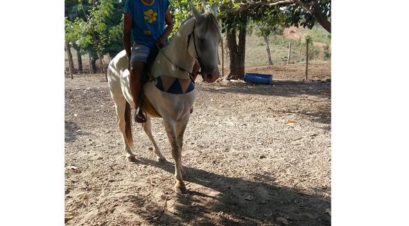 Equídeo Equino Quarto de Milha Não Registrado Cavalo Tordilha Trabalho - e-rural Imagens
