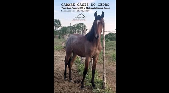 Equídeo Equino Mangalarga Marchador Registrado - e-rural Imagens