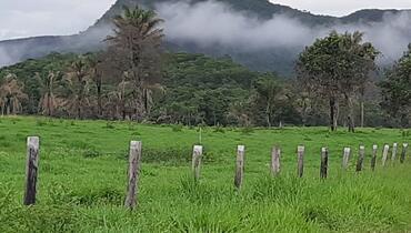 Bovino Dupla Aptidão Simental Garrote - e-rural Imagens