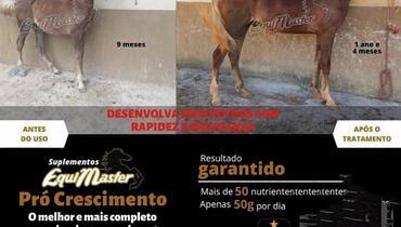 Equídeo Equino Diversos Diversos Castanha Marcha Picada Registrado - e-rural Imagens