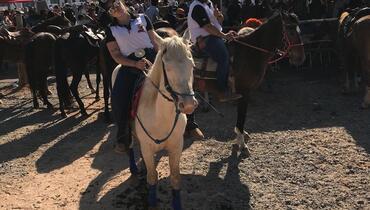 Equídeo Equino Quarto de Milha Cavalo Rosilha Tração Não Registrado - e-rural Imagens