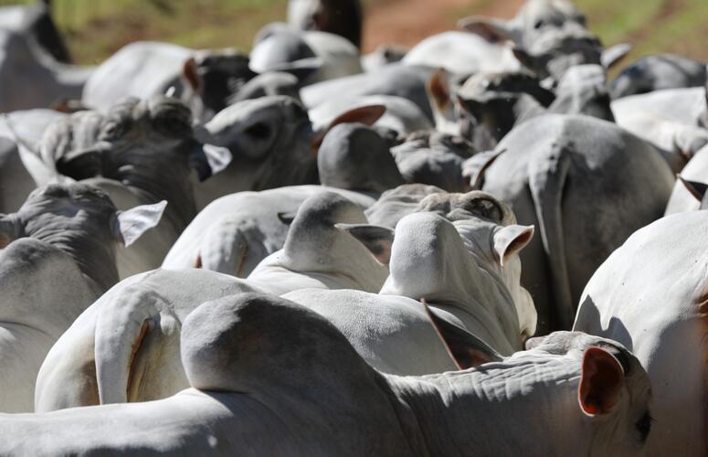 Carne bovina: no atacado, preço registrou alta de 0,5% em sete dias