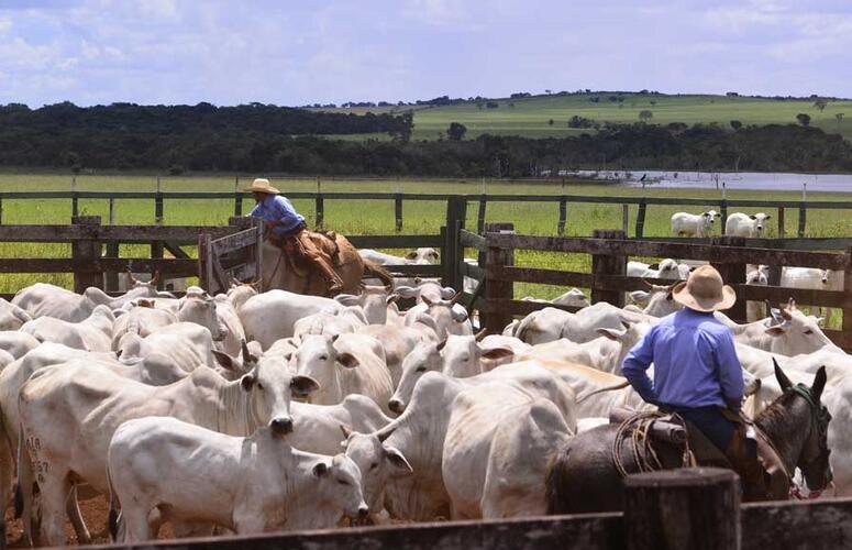 Preço do boi vai subir mais em 2021, apostam especialistas