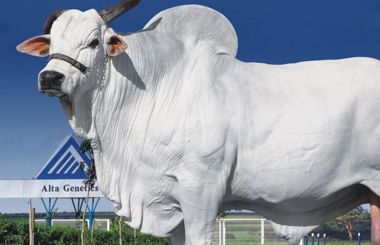 EPMURAS - Sistema de avaliação de bovinos.