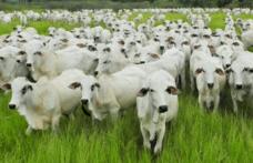 Capa - Proposta determina identificação eletrônica do gado criado a pasto