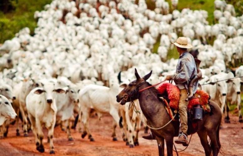 Pecuária: atividade responde a 10% do PIB brasileiro
