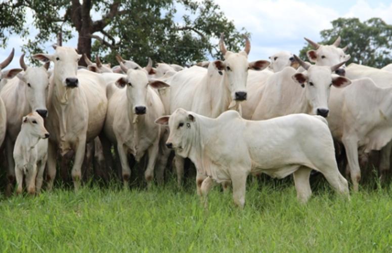 05 Erros que todo produtor comete no controle reprodutivo de vacas