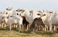 Capa - Quando inseminar uma vaca no cio?
