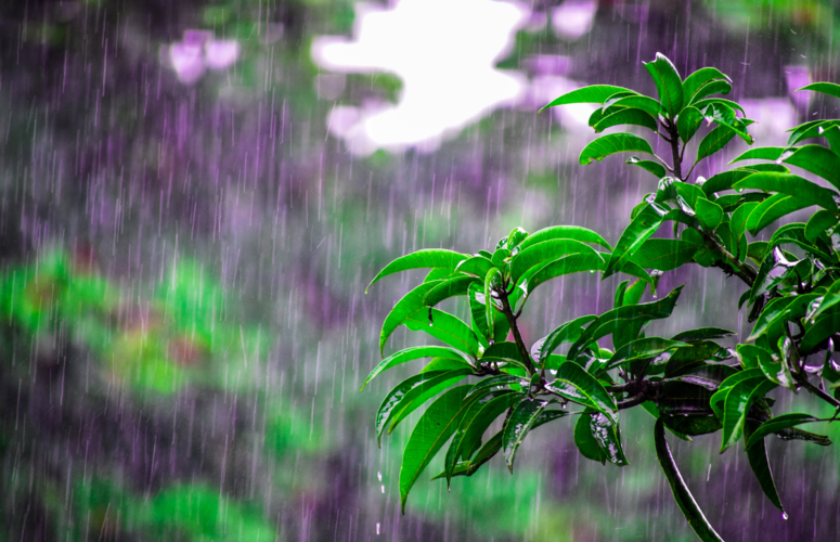 La Niña vai ditar mais o clima no verão do que na primavera