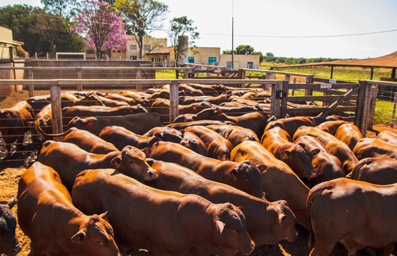 Pecuária mais intensiva faz crescer empregos nas fazendas de MT