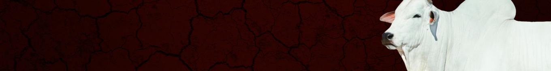 Leilão Terra Brava