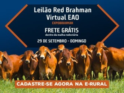 Red Brahman