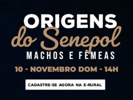 Leilão Origens do Senepol - Machos & Fêmeas