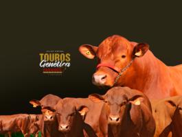 LEILÃO TOUROS GENÉTICA PARANOÁ SENEPOL & CONVIDADOS