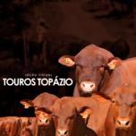 LEILÃO VIRTUAL TOUROS SENEPOL DA GRAMA