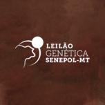 11º LEILÃO GENÉTICA SENEPOL-MT