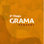 LEILÃO VIRTUAL TOUROS TOPÁZIO GRAMA SENEPOL