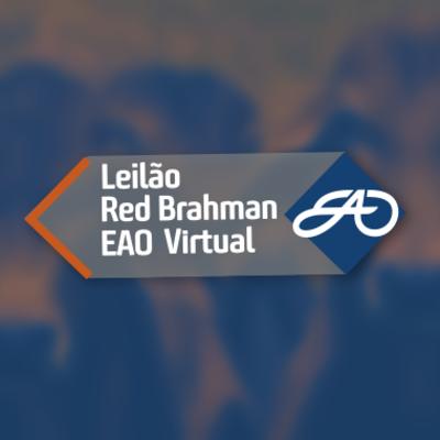 LEILÃO RED BRAHMAN VIRTUAL EAO