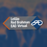 LEILÃO RED BRAHMAN VIRTUAL EAO
